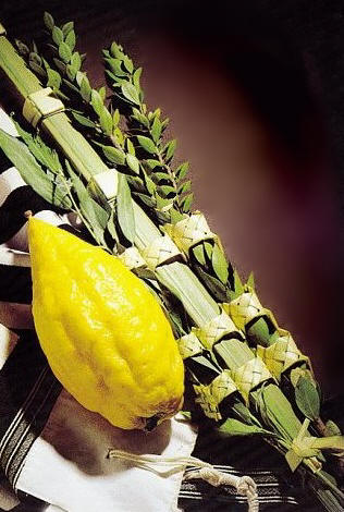 Deluxe Quality Kosher Lulav and Etrog set from Israel